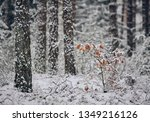 Freshly snow covered tree trunks of pine trees and a little oak tree in the Fraconian forest near Diepersdorf in Bavaria, Germany