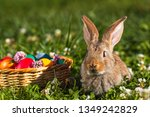 rabbit and easter basket with... | Shutterstock . vector #1349242829