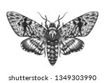 hand drawn acherontia styx... | Shutterstock . vector #1349303990