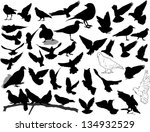 set of 38 birds and silhouettes ... | Shutterstock .eps vector #134932529