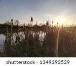 dried up cane at sunset | Shutterstock . vector #1349392529