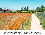 Red poppy flower field at Sangdong Lake Park in Bucheon, Korea