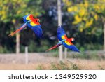 couple of the red and green... | Shutterstock . vector #1349529920