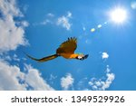 blue and gold macaw  ara... | Shutterstock . vector #1349529926
