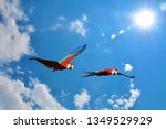 the red and green macaw  ara... | Shutterstock . vector #1349529929