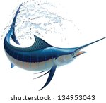 Blue Marlin Swinging In Water...