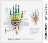 human anatomy hand bone vector... | Shutterstock .eps vector #1349616173