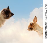 Stock photo two home pets next to each other on a light background funny collage 134967470