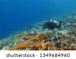 scuba diver photographer on the ... | Shutterstock . vector #1349684960