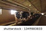 herd of cows in cowshed.... | Shutterstock . vector #1349883833