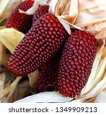 Red Aztec  Heirloom Field Corn ...