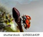 Ladybug Spread Its Wings