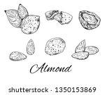 ink almond hand drawn set.... | Shutterstock .eps vector #1350153869