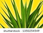 abstract green tropical leaves...   Shutterstock . vector #1350254549