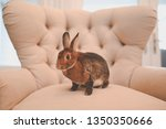 Stock photo rags to riches easter rabbit 1350350666