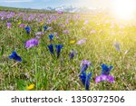 panoramic meadow with spring... | Shutterstock . vector #1350372506