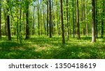 forest trees. nature green wood ... | Shutterstock . vector #1350418619