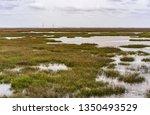 extensive salt marsh on jekyll... | Shutterstock . vector #1350493529