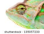 Yemen Chameleon Muzzle Isolate...