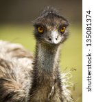 Portrait Of An Emu At A Zoo