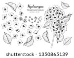collection set of hydrangea... | Shutterstock .eps vector #1350865139