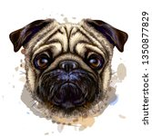 pug. artistic graphic  hand... | Shutterstock .eps vector #1350877829