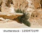 green plants among the rocks in ... | Shutterstock . vector #1350973199