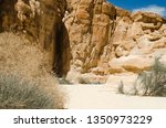 green plants among the rocks in ... | Shutterstock . vector #1350973229