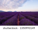the moon above lavender field... | Shutterstock . vector #1350993149