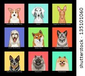 the buddy dog  collection 05 | Shutterstock . vector #135101060