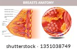 woman breasts anatomy. highly... | Shutterstock .eps vector #1351038749