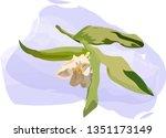 White Flower   Tulip  Green...