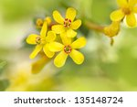 Beautiful Yellow Flower In...