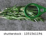 Small photo of Rosemary is viewed under a magnifying glass. The concept of close study of the properties of rosemary. Food under the microscope.