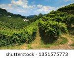 conegliano valdobbiadene region ...   Shutterstock . vector #1351575773