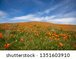 blue sky over the orange poppies | Shutterstock . vector #1351603910