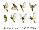 Stock photo beautiful flying bird olive backed sunbird isolate on white background the collection birds 1351715996