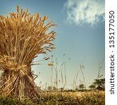 nature background in vintage... | Shutterstock . vector #135177050