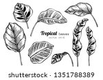 collection set of tropical... | Shutterstock .eps vector #1351788389