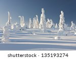 Snowy Forest With Slim Tall...