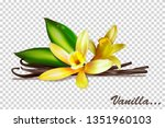 vanilla bunches with flowers... | Shutterstock .eps vector #1351960103