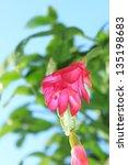 Fine Pink Flower Of...