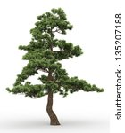 old pine tree isolated on white | Shutterstock . vector #135207188