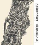 twisted wild lianas. woody... | Shutterstock .eps vector #1352088590