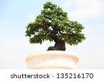 bonzai plant | Shutterstock . vector #135216170