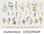spring flowers and ferns. set.... | Shutterstock .eps vector #1352294639