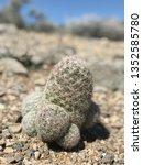 desert cactus wild | Shutterstock . vector #1352585780