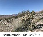 wild desert cholla | Shutterstock . vector #1352592710