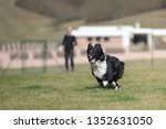 border collie dog. stroll.... | Shutterstock . vector #1352631050
