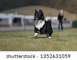border collie dog. stroll.... | Shutterstock . vector #1352631059
